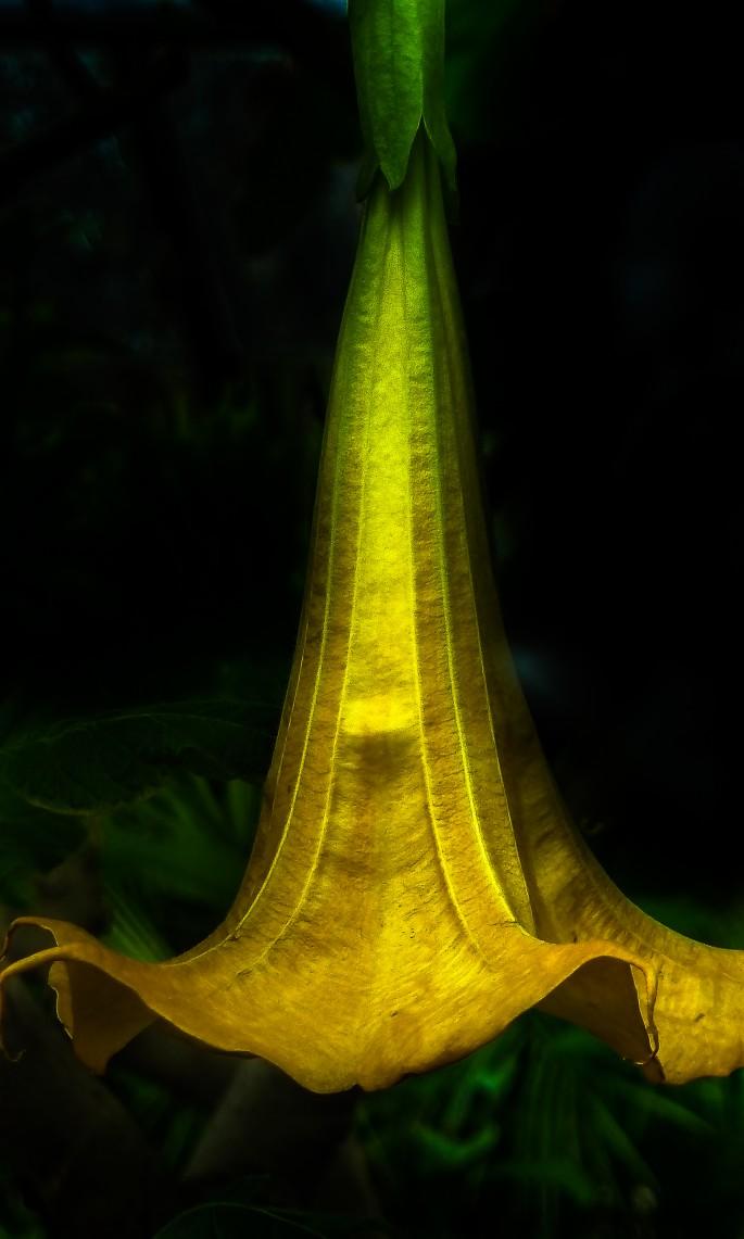 Chris Joakim, </span><span><em>Trumpet Flower</em>, </span><span>2013