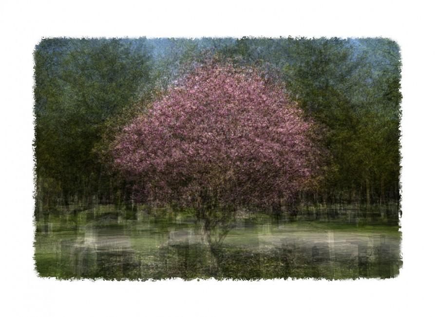 Avo Koplimae, </span><span><em>Magnolia</em>, </span><span>2014