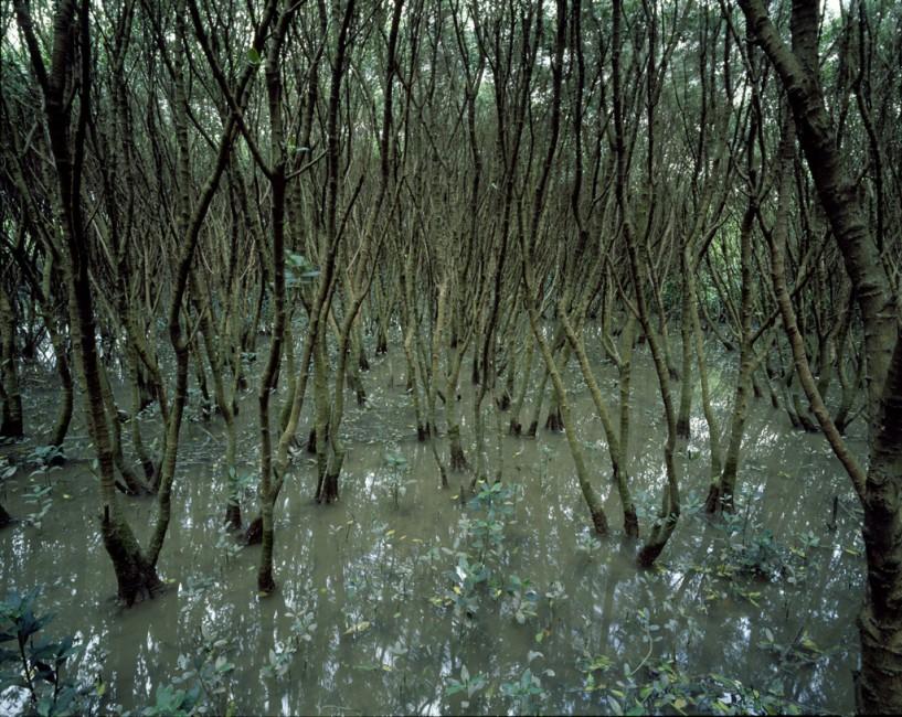 Philip Jessup, </span><span><em>Mai Po Mangrove Forest, Hong Kong</em>, </span><span>2010