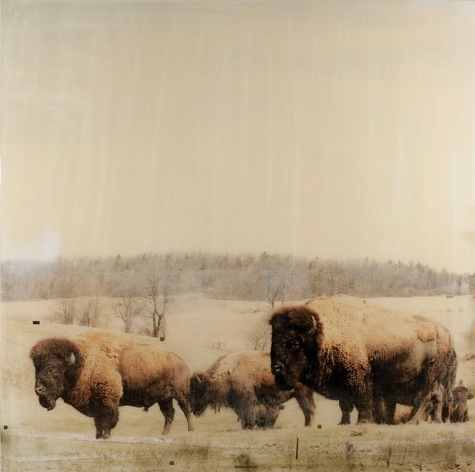 Christine Flynn, </span><span><em>Bison</em>, </span><span>2013