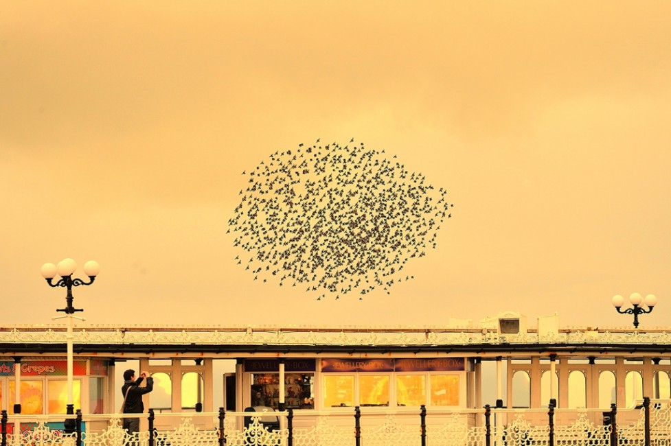 Robby Bernstein, </span><span><em>Starlings Above the Pier (Brighton)</em>, </span><span>2014