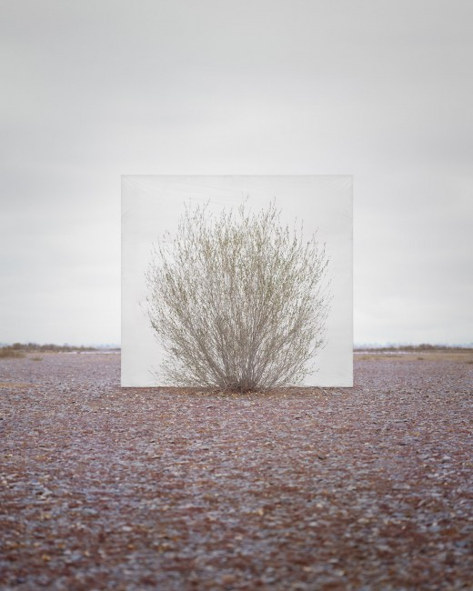 Myoung Ho Lee, </span><span><em>Tree...#5</em>, </span><span>2013 Courtesy of the artist and Yossi Milo Gallery, New York
