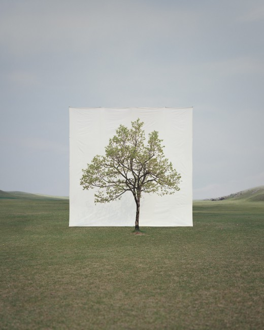 Myoung Ho Lee, </span><span><em>Tree #14</em>, </span><span>2009 Courtesy of the artist and Yossi Milo Gallery, New York