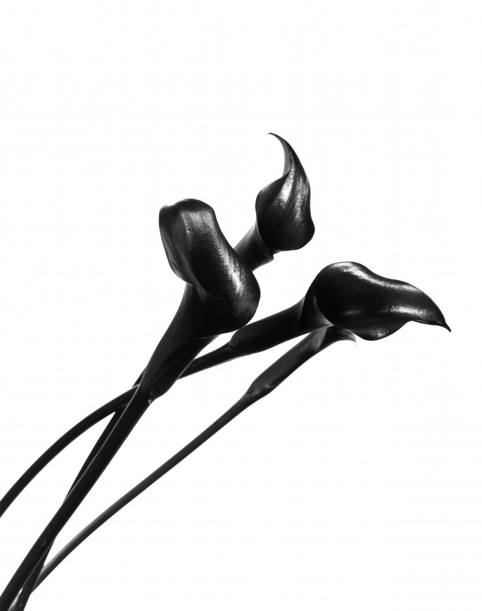 Dale M Reid, </span><span><em>Elegance Calla Lys Noir 2</em>, </span><span>2014