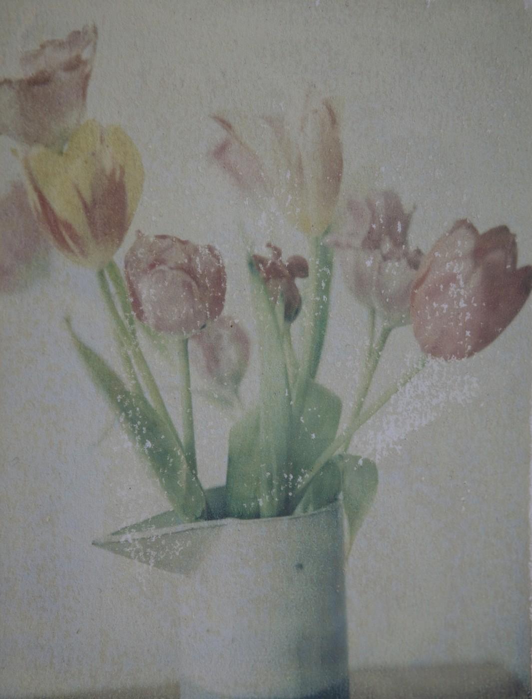 Phillipa C., </span><span><em>Tulips</em>, </span><span>2015