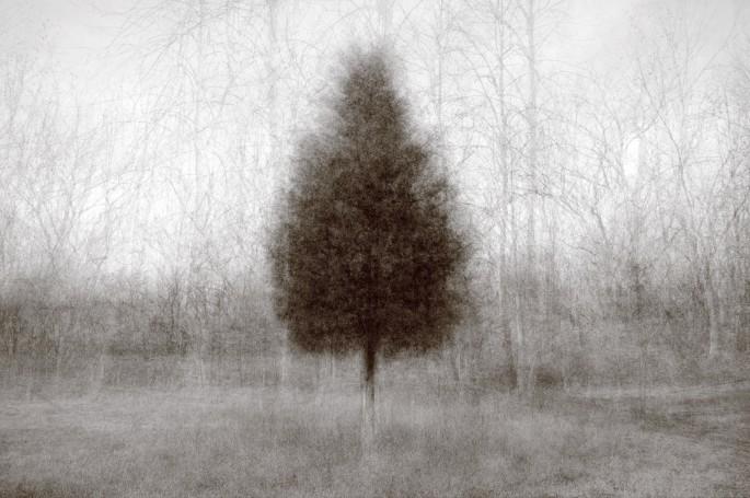 Kent Krugh, </span><span><em>Higher Ground Cedar</em>, </span><span>2011-2015