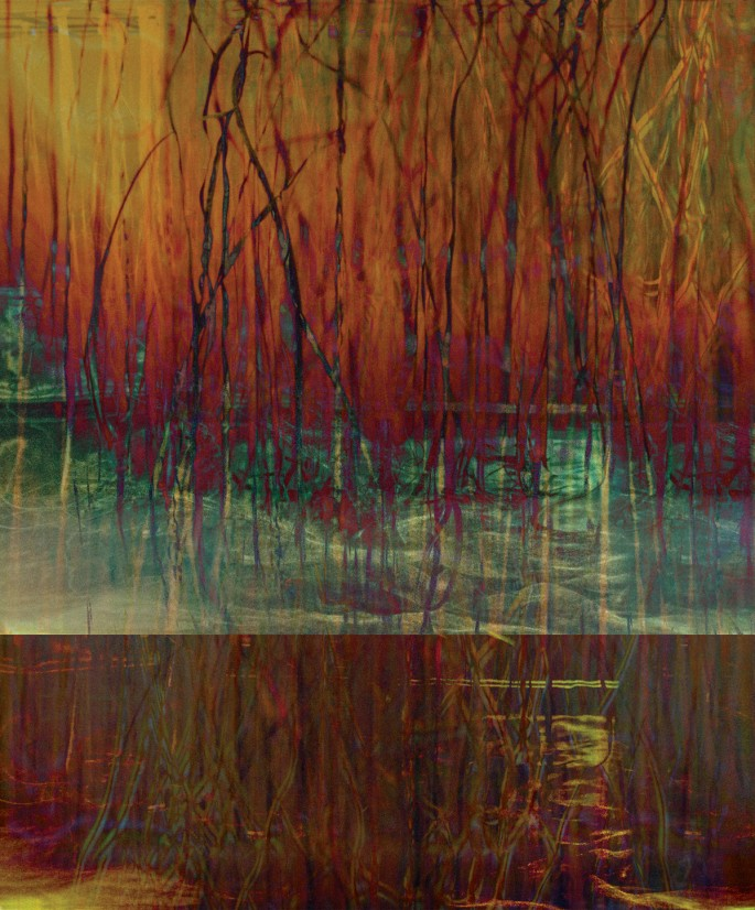 "Joan Kaufman, </span><span><em>Root Series 2.4</em>, </span><span>2015. Archival pigment print, 44 x 36""."