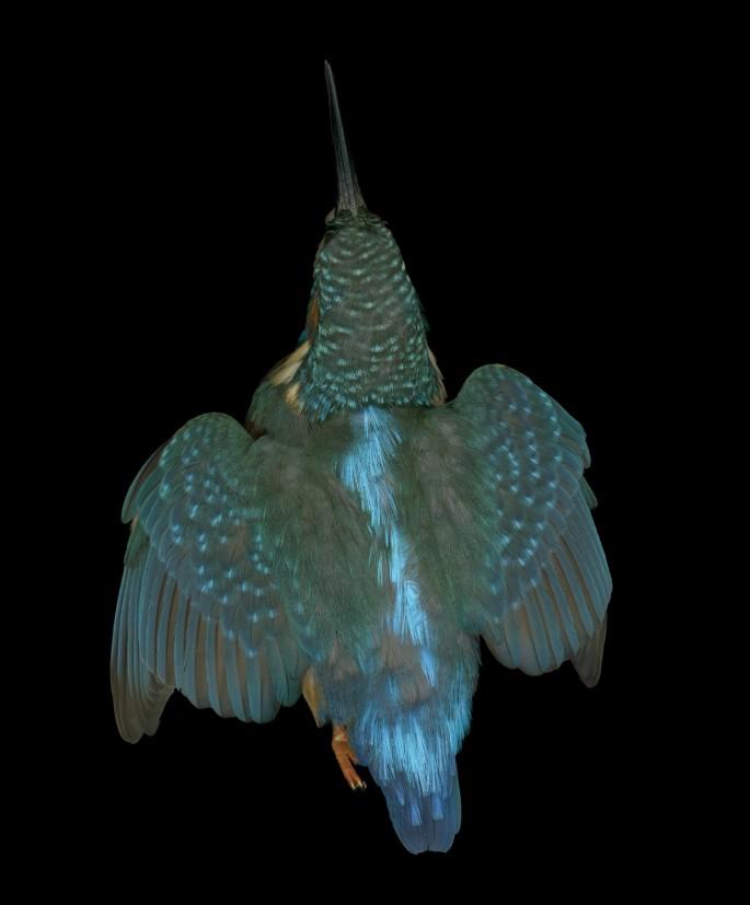 Edgar Leciejewski, </span><span><em>Kingfisher #08</em>, </span><span>2009. From the series &quot;Aves,&quot; 2003-09