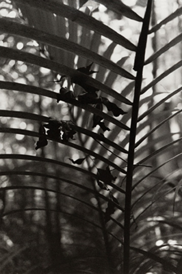 Daniel Steegmann Magrané, </span><span><em>Spiral Forest</em>, </span><span>(detail), 2015. 5 chromogenic prints and 6 gelatin silver prints, 30.3 x 22.4&quot; each. Courtesy of the artist and Esther Schipper, Berlin. Collection of Elisa Nuyten and David Dime.