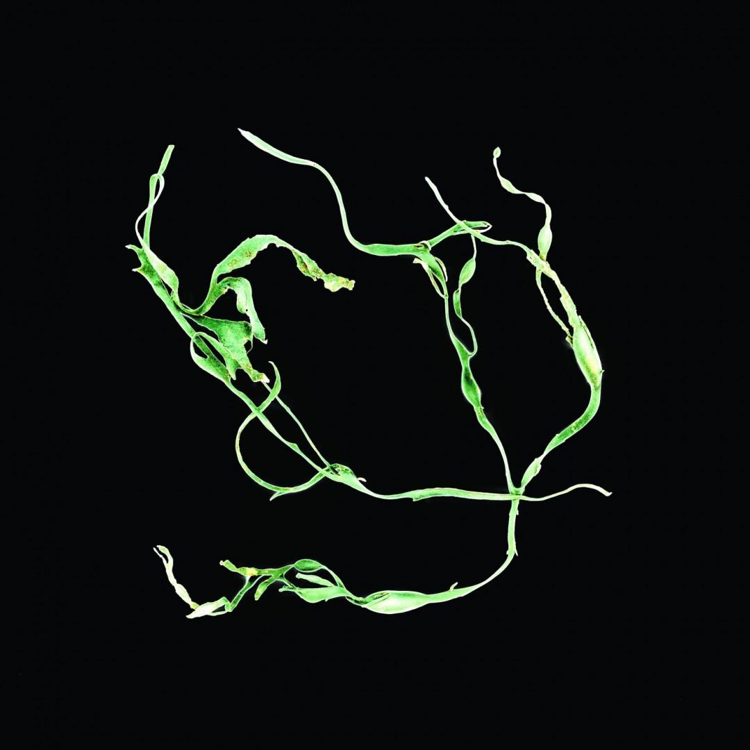 Linda Briskin, </span><span><em>aqua botanica #ii</em>, </span><span>2015