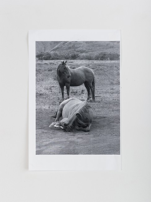 Davida Nemeroff, from the series, </span><span><em>Muscles</em>, </span><span>2016
