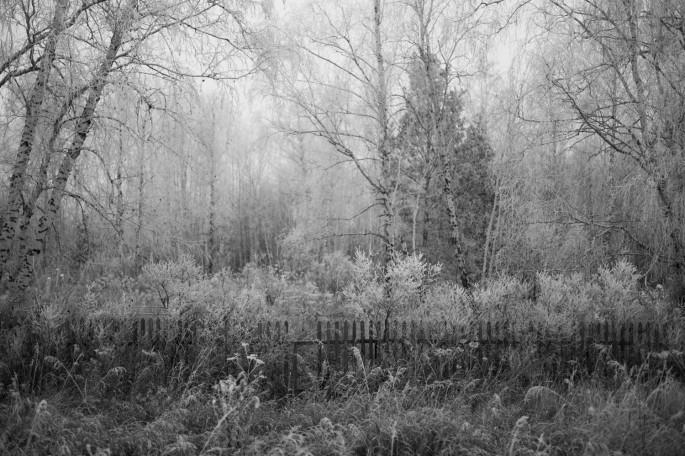 Ian Willms, </span><span><em>Novosibirsk region, Russia</em>, </span><span>2013
