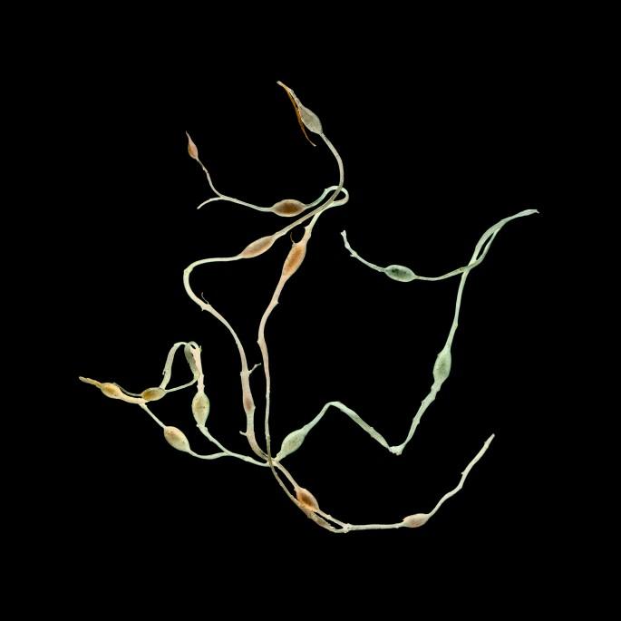 Linda Briskin, </span><span><em>aqua botanica (x)</em>, </span><span>2016