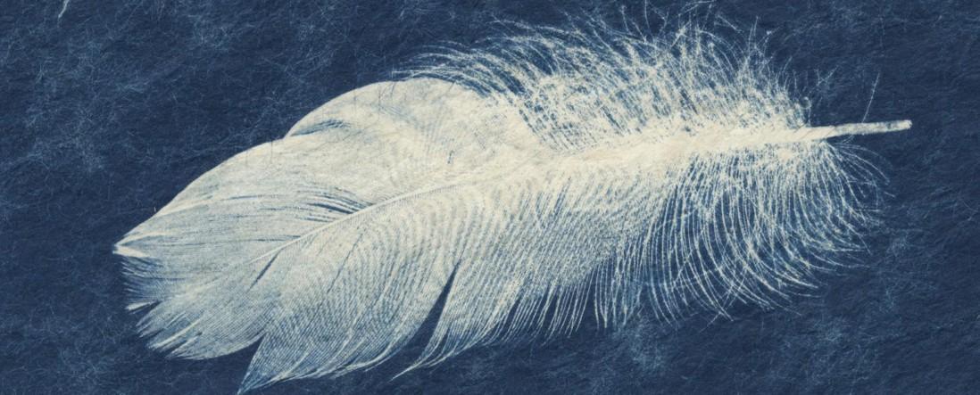 Sally Ayre, </span><span><em>Feather Cyanows</em>
