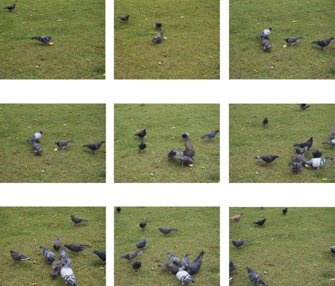 Sae Kimura, Pigeon Lunch, 2017