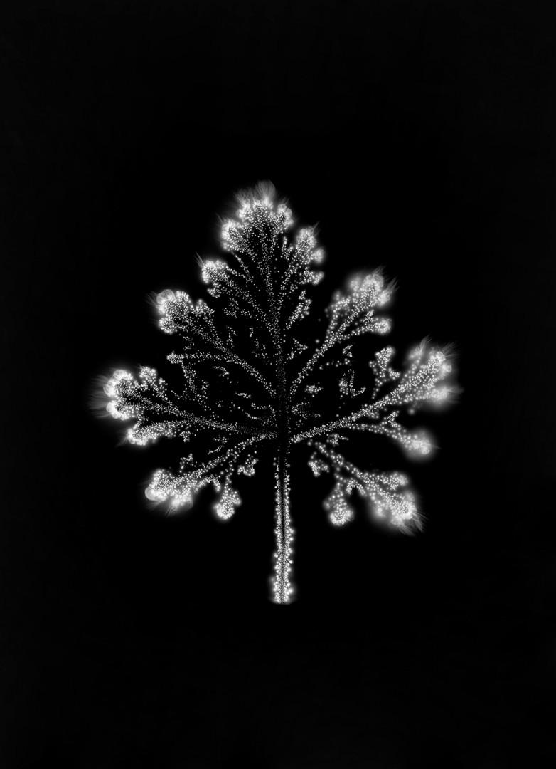 Bodies of Light no. 697, 1997-2018. Electromagnetic capture on silver gelatin negative, Archival pigment print, 7.25 x 5.25. Courtesy of Pierre-François Ouellette art contemporain.