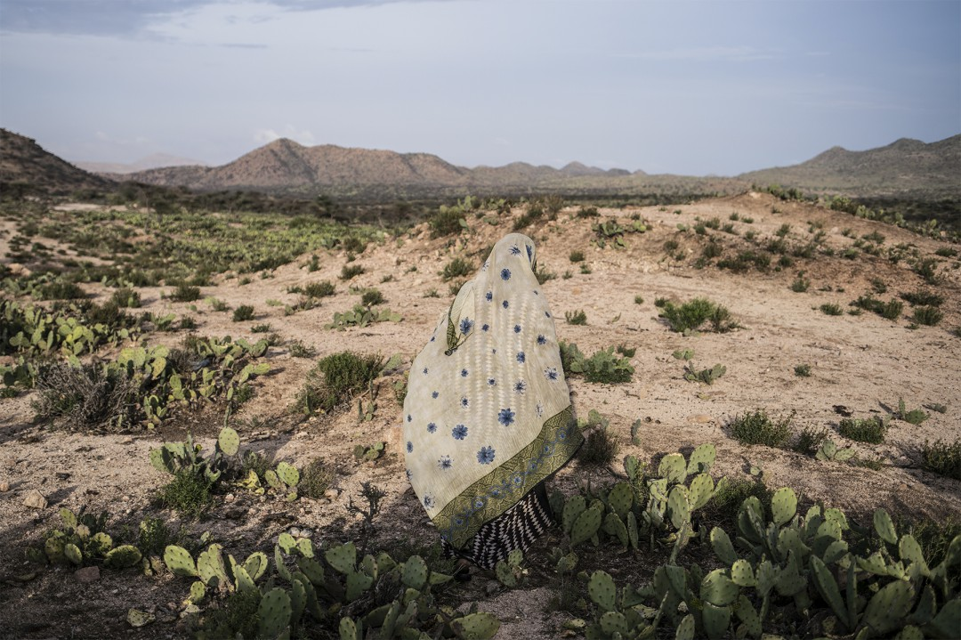 Nichole Sobecki, Field of Cacti, April 2016. Archival pigment print, 24 × 36.