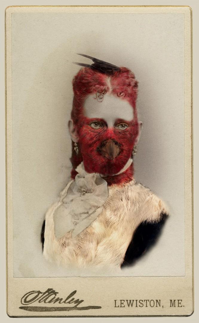 "Sara Angelucci, Red-headed Woodpecker/endangered, 22"" x 33.5,Aviary Series, chromogenic prints, 2013."