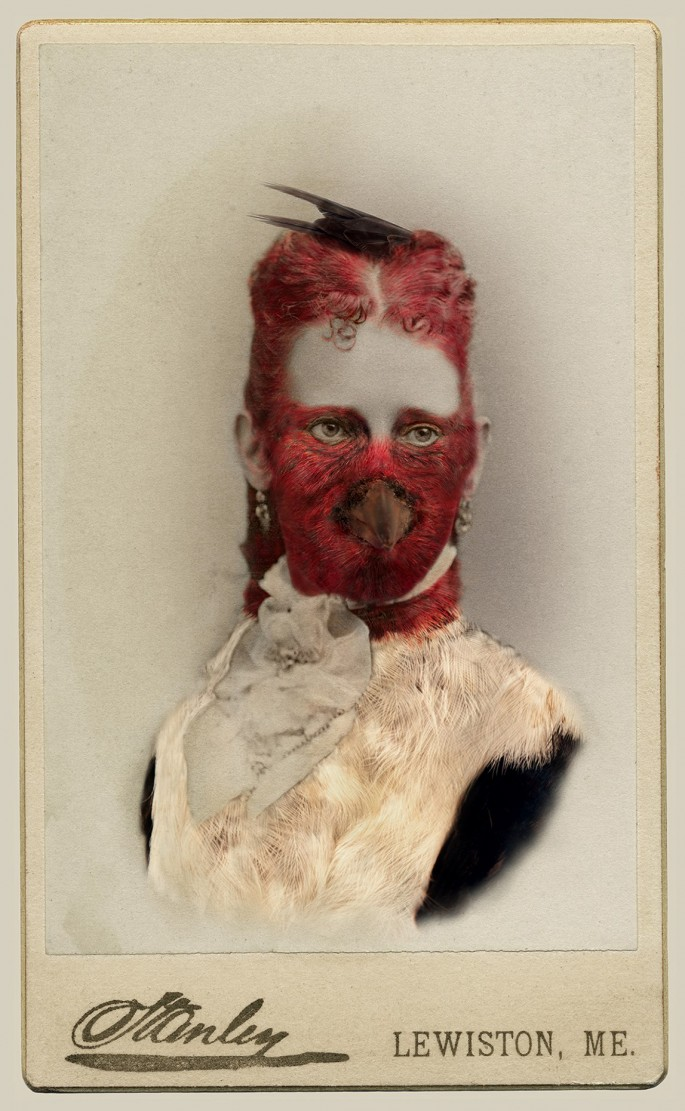 "Sara Angelucci, </span><span><em>Red-headed Woodpecker/endangered</em>, </span><span>22"" x 33.5&quot;,Aviary Series, chromogenic prints, 2013."