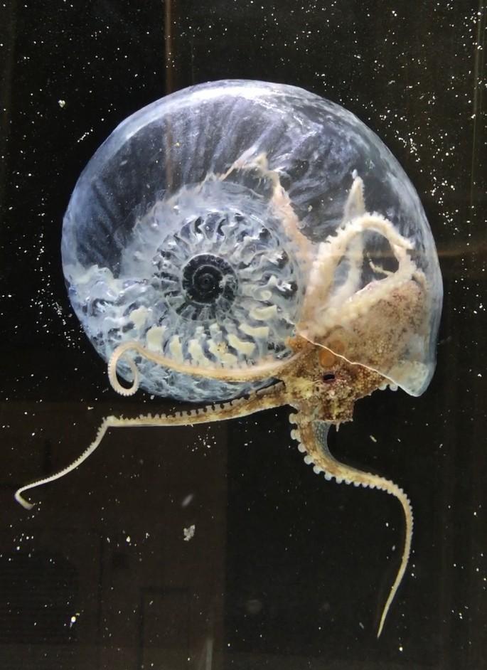 """AkiInamota, </span><span><em>Think Evolution #1:Kiku-ishi (Ammonite)</em>, </span><span>Video, 1'57"""", 2016-17."""