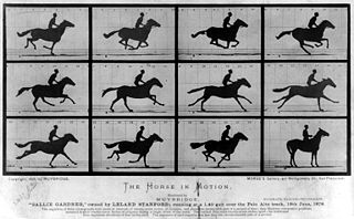 A photograph series capturing the different stages of the running motion of a horse.