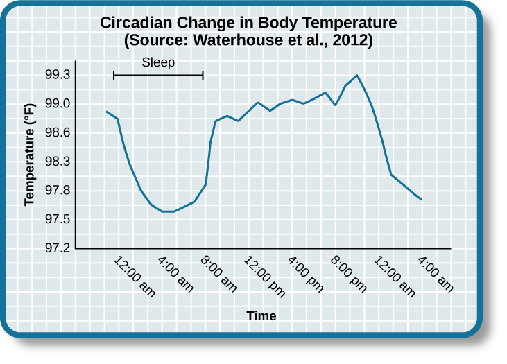 "A line graph is titled ""Circadian Change in Body Temperature (Source: Waterhouse et al., 2012)."" The y-axis, is labeled ""temperature (degrees Fahrenheit),"" ranges from 97.2 to 99.3. The x-axis, which is labeled ""time,"" begins at 12:00 A.M. and ends at 4:00 A.M. the following day. The subjects slept from 12:00 A.M. until 8:00 A.M. during which time their average body temperatures dropped from around 98.8 degrees at midnight to 97.6 degrees at 4:00 A.M. and then gradually rose back to nearly the same starting temperature by 8:00 A.M. The average body temperature fluctuated slightly throughout the day with an upward tilt, until the next sleep cycle where the temperature again dropped."