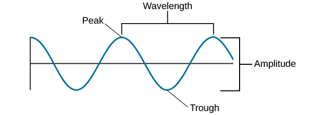 """A diagram illustrates the basic parts of a wave. Moving from left to right, the wavelength line begins above a straight horizontal line and falls and rises equally above and below that line. One of the areas where the wavelength line reaches its highest point is labeled """"Peak."""" A horizontal bracket, labeled """"Wavelength,"""" extends from this area to the next peak. One of the areas where the wavelength reaches its lowest point is labeled """"Trough."""" A vertical bracket, labeled """"Amplitude,"""" extends from a """"Peak"""" to a """"Trough."""""""