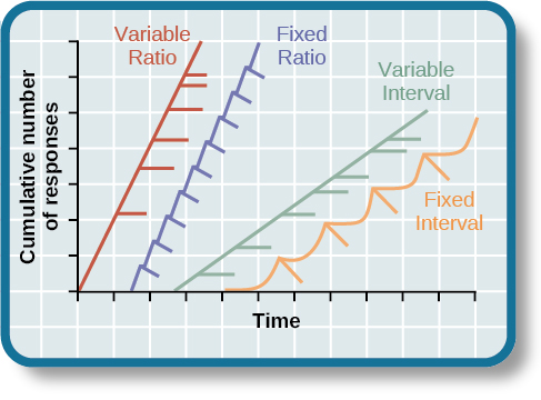 """A graph has an x-axis labeled """"Time"""" and a y-axis labeled """"Cumulative number of responses."""" Two lines labeled """"Variable Ratio"""" and """"Fixed Ratio"""" have similar, steep slopes. The variable ratio line remains straight and is marked in random points where reinforcement occurs. The fixed ratio line has consistently spaced marks indicating where reinforcement has occurred, but after each reinforcement, there is a small drop in the line before it resumes its overall slope. Two lines labeled """"Variable Interval"""" and """"Fixed Interval"""" have similar slopes at roughly a 45-degree angle. The variable interval line remains straight and is marked in random points where reinforcement occurs. The fixed interval line has consistently spaced marks indicating where reinforcement has occurred, but after each reinforcement, there is a drop in the line."""