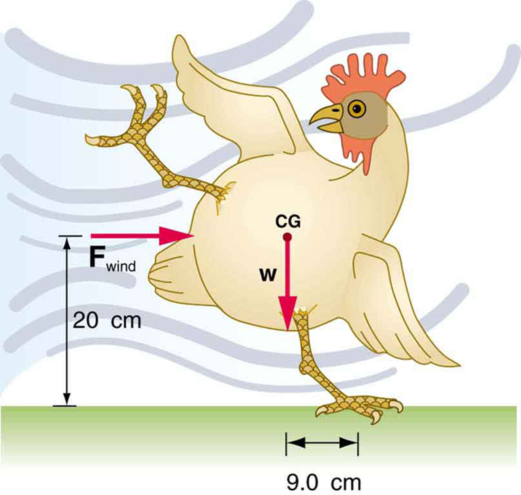 A chicken is trying to balance on its left foot, which is 9 point zero centimeters to the right of the chicken. The force of the wind is blowing from the left toward the chicken's center of gravity c g, which is 20 cm above the ground. The weight of the chicken w is acting at the center of gravity.