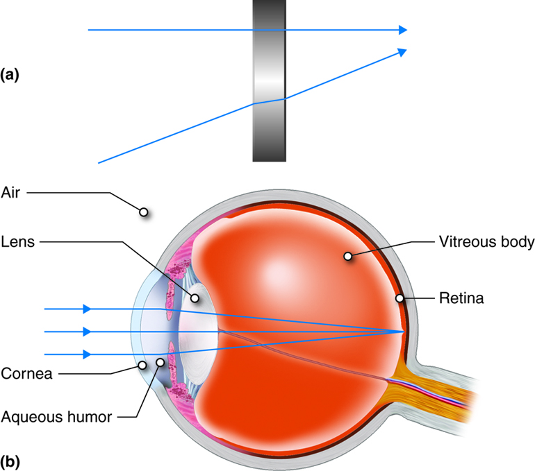 The refraction of light rays as they pass from one medium to another (a), such as through the cornea and lens (b).