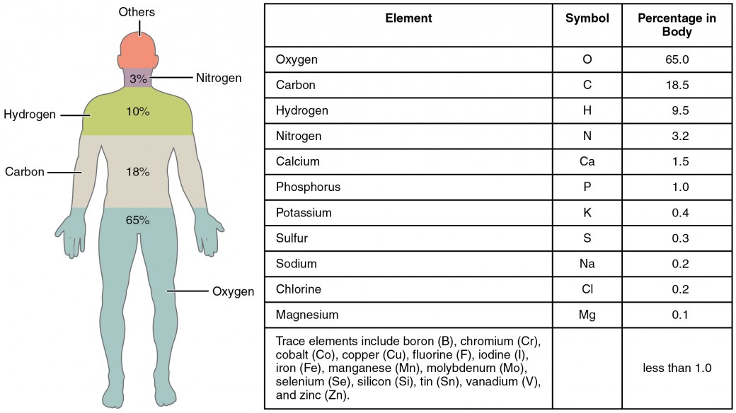 this figure shows a human body with the percentage of the main elements in the body