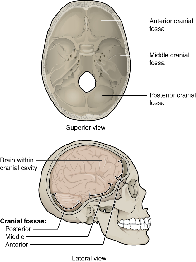 Image Result For Anatomy Skull Coloring