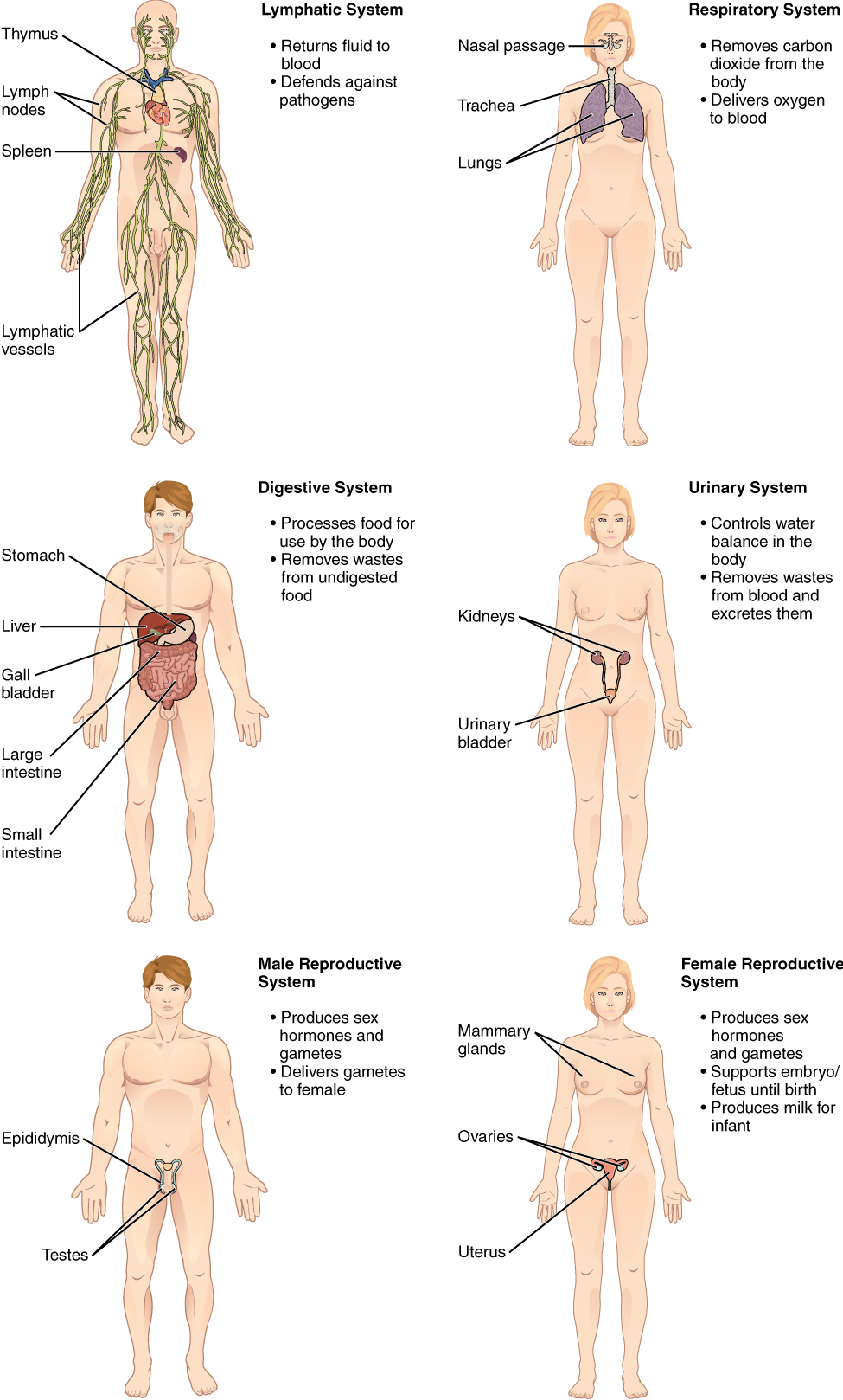 Overview of Anatomy and Physiology | Anatomy and Physiology