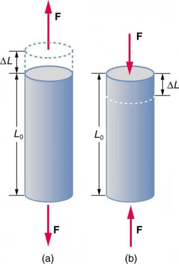 Figure a is a cylindrical rod standing on its end with a height of L sub zero. Two vectors labeled F extend away from each end. A dotted outline indicates that the rod is stretched by a length of delta L. Figure b is a similar rod of identical height L sub zero, but two vectors labeled F exert a force toward the ends of the rod. A dotted line indicates that the rod is compressed by a length of delta L.