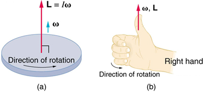 In figure a, a disk is rotating in counter clockwise direction. The direction of the angular momentum is shown as an upward vector at the centre of the disk. The vector is labeled as L is equal to I-omega. In figure b, a right hand is shown. The fingers are curled in the direction of rotation and the thumb is pointed vertically upward in the direction of angular velocity and angular momentum.