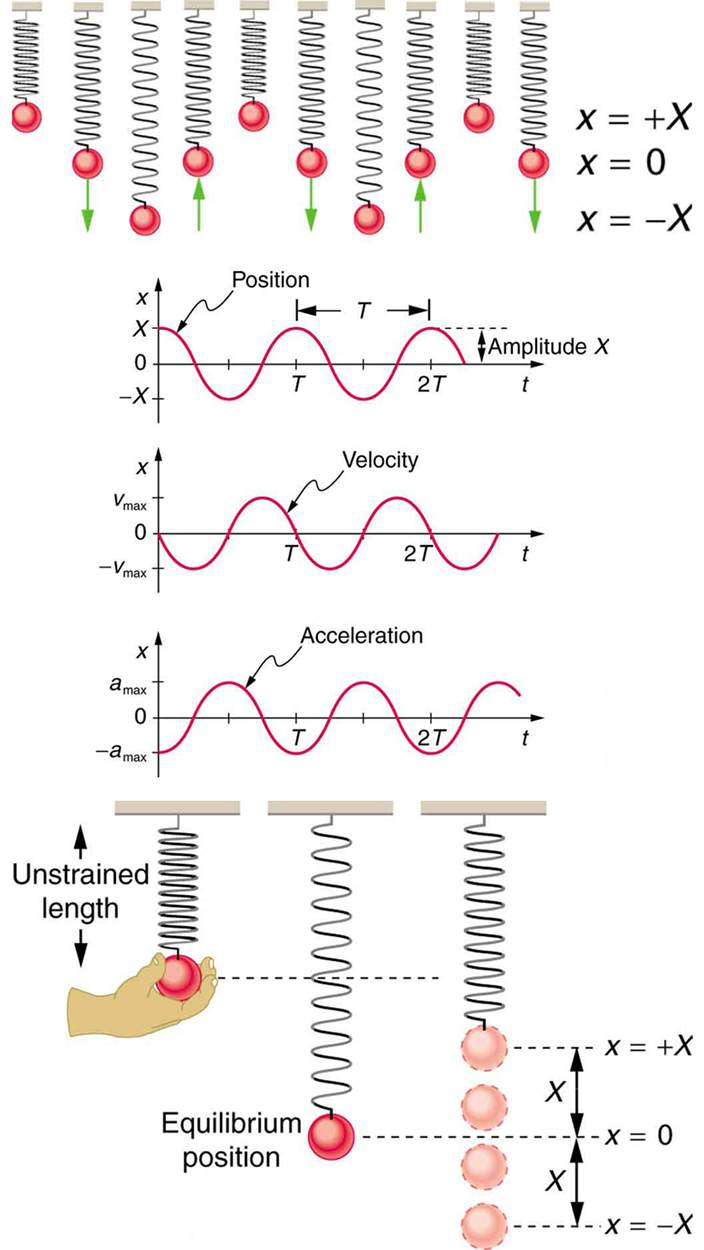 Simple Harmonic Motion: A Special Periodic Motion | Physics