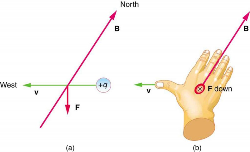 The effects of the Earth's magnetic field on moving charges. Figure a shows a positive charge with a velocity vector due west, a magnetic field line B oriented due north, and a magnetic force vector F straight down. Figure b shows the right hand facing down, with the fingers pointing north with B, the thumb pointing west with v, and force down away from the hand.