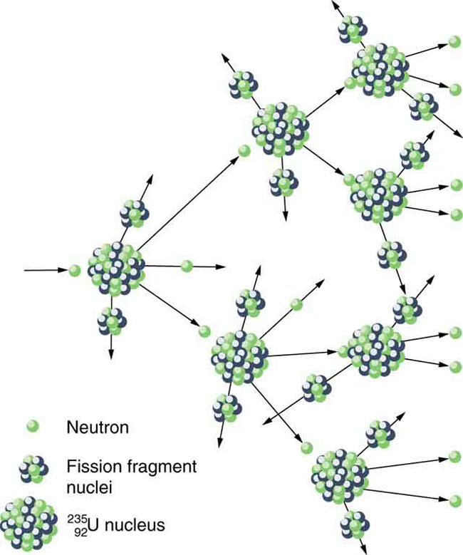 A uranium nucleus struck by a neutron produces two fragments and three neutrons, two of which continue to strike two other uranium nuclei and hence, initiate a chain reaction.