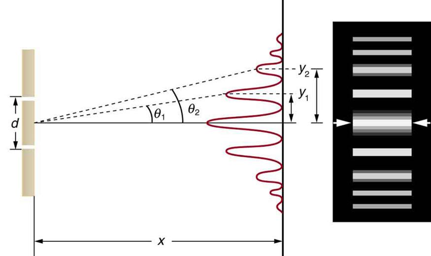 A figura consiste em duas partes dispostas lado a lado. O diagrama do lado esquerdo mostra uma disposição de fenda dupla juntamente com um gráfico do padrão de intensidade resultante num ecrã distante. O gráfico é orientado verticalmente, para que os picos de intensidade cresçam para fora e para a esquerda a partir do ecrã. O pico de intensidade máxima está no centro do ecrã, e alguns picos menos intensos aparecem em ambos os lados do centro. Estes picos tornam-se progressivamente mais escuros ao afastar-se do centro, e são simétricos em relação ao pico central. A distância do máximo central até ao primeiro pico de intensidade é rotulada y sub um, e a distância do máximo central até ao segundo pico de intensidade é rotulada y sub dois. A ilustração do lado direito mostra barras horizontais espessas e brilhantes sobre um fundo escuro. Cada barra horizontal está alinhada com um dos picos de intensidade da primeira figura.