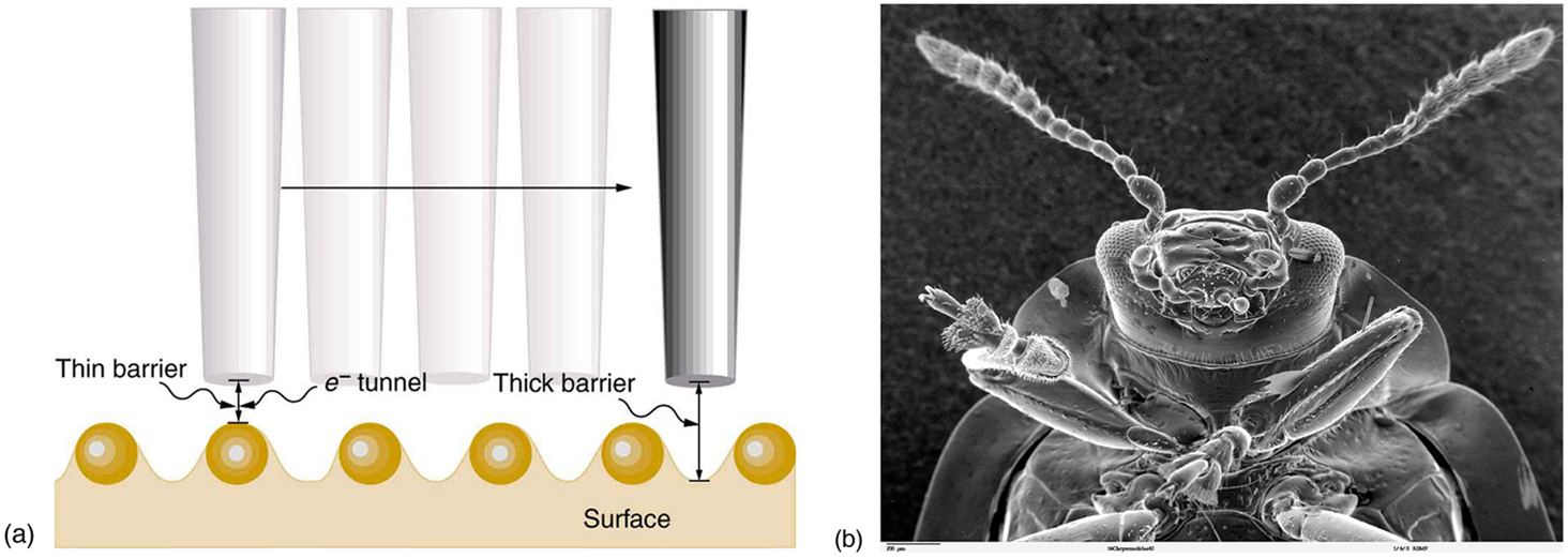 Figure a shows a wavy surface with a taper cylindrical probe traveling horizontally toward right. Wherever there is a crest the barrier between probe and surface is thick and the barrier is thin when there is a hill on the surface. Figure b shows a scanning tunneling electron microscope image of an insect.