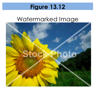"Figure 13.12, a watermarked image. Photo shows a sunflower. A white X and the word ""StockPhoto"" cover the image."