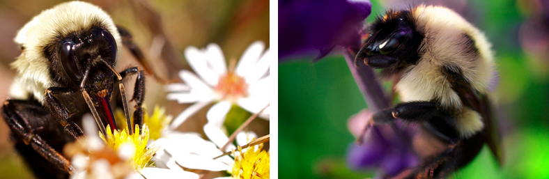 Photos A and B show virtually identical looking insects.