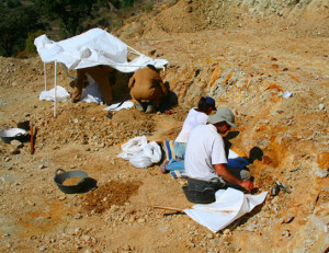 Photo depicts scientists digging fossils out of the dirt.