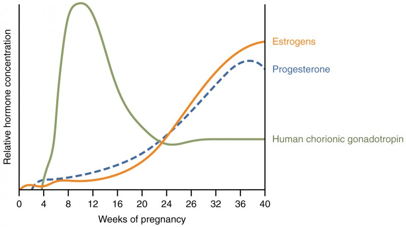 Maternal Changes During Pregnancy, Labor, and Birth
