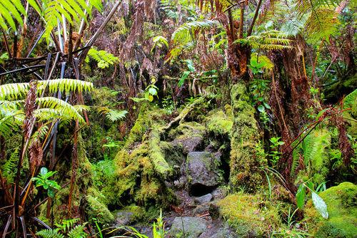 Uma floresta musgosa