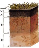 Diagrama de um perfil do solo mostrando as diferentes camadas coloridas