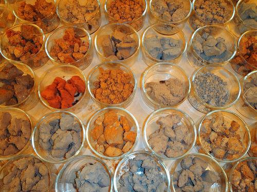 Várias taças transparentes, cada uma segurando um tipo diferente de solo.