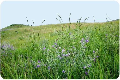 Um campo gramado com algumas flores silvestres