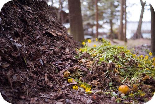 Vegetação depenada em uma pilha de folhas em decomposição
