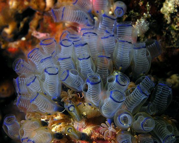 Coral that look like springs